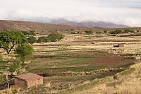 CULTIVOS EN YAVI, PROV. DE JUJUY, ARGENTINA