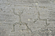 """Petroglyph, rock carving, of schematic figures in a so called """"prayer"""" position. Carved by the ancient Camuni people in the iron age between 1000-1200 BC.  Rock 21, Foppi di Nadro, Riserva Naturale Incisioni Rupestri di Ceto, Cimbergo e Paspardo, Capo di Ponti, Valcamonica (Val Camonica), Lombardy plain, Italy .<br /> <br /> Visit our PREHISTORY PHOTO COLLECTIONS for more   photos  to download or buy as prints https://funkystock.photoshelter.com/gallery-collection/Prehistoric-Neolithic-Sites-Art-Artefacts-Pictures-Photos/C0000tfxw63zrUT4<br /> If you prefer to buy from our ALAMY PHOTO LIBRARY  Collection visit : https://www.alamy.com/portfolio/paul-williams-funkystock/valcamonica-rock-art.html"""
