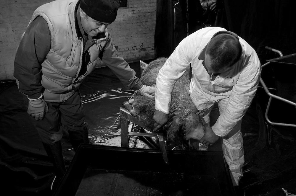 Sacrifice Day Leopoldsburg 2008