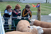 James, Andrew and Luke Gallagher of Trim Co Meath attending 'SHEEP2015', the major National Sheep Open Day hosted by Teagasc at Athenry on Saturday. Photo:- Andrew Downes / xposure.ie  No Fee. Issued on behalf of Teagas