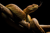 Africa's snakebite crisis