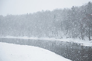 Heavy snowfall and partly frozen River Gauja with a flock of ducks sitting on ice, Gauja National Park (Gaujas Nacionālais parks), Latvia Ⓒ Davis Ulands   davisulands.com