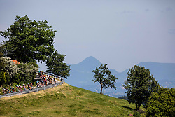 Peloton at climb to Celjska koca during 2nd Stage of 26th Tour of Slovenia 2019 cycling race between Maribor and Celje (146,3 km), on June 20, 2019 in  Slovenia. Photo by Vid Ponikvar / Sportida