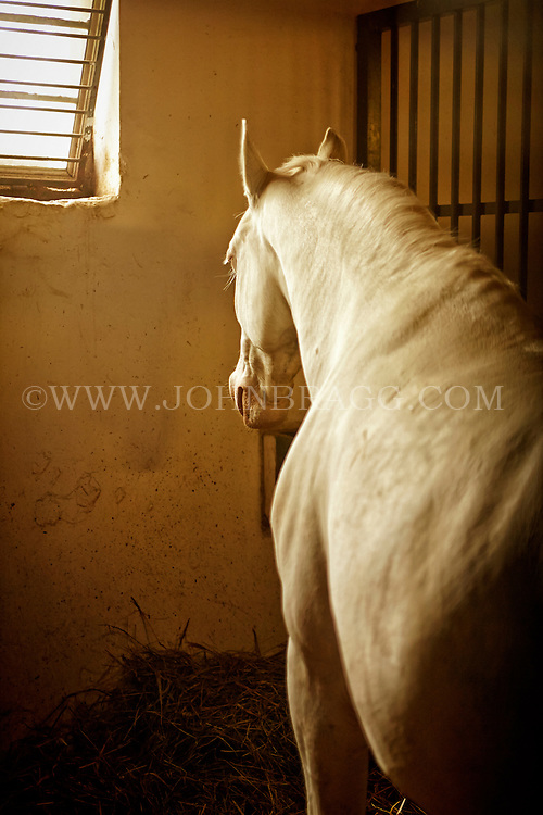 View of white horse in its stall at the Lazar Equestrian Park, Domonyvolgy, Hungary