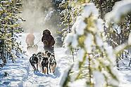 Dogsledding through the sub Arctic of the Yukon Territory of Canada