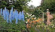 Delphininium 'Skyline', a bright blue delphinium in a border at Wollerton Old Hall, Wollerton, Market Drayton, Shropshire, UK
