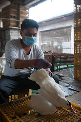 60827069  <br /> A worker examines ducks at a live poultry market in Longgang District of Shenzhen City, south China s Guangdong Province, Dec. 13, 2013. Samples taken from two live poultry markets in Shenzhen have tested positive for H7N9 bird flu, the Guangdong provincial health authority confirmed on Wednesday. Guangdong health authorities warned the public to be aware of H7N9 transmission risks. The poultry markets where samples tested positive were asked to close for a week, Friday, 13th December 2013. Picture by  imago / i-Images