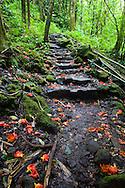 Hiking up the Oheo Gulch in Hana, Maui, a trail located within Haleakala National Park, Hawaii