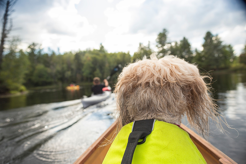 Lifestyle image of a Dog in a canoe from owner's POV taken in the Adirondack Park of New York