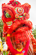 """29 SEPTEMBER 2012 - NAKORN NAYOK, THAILAND: Thai Chinese style Lion dancers perform during observances of Ganesh Ustav at Wat Utthayan Ganesh, a temple dedicated to Ganesh in Nakorn Nayok, about three hours from Bangkok. Many Thai Buddhists incorporate Hindu elements, including worship of Ganesh into their spiritual life. Ganesha Chaturthi also known as Vinayaka Chaturthi, is the Hindu festival celebrated on the day of the re-birth of Lord Ganesha, the son of Shiva and Parvati. The festival, also known as Ganeshotsav (""""festival of Ganesha"""") is observed in the Hindu calendar month of Bhaadrapada, starting on the the fourth day of the waxing moon. The festival lasts for 10 days, ending on the fourteenth day of the waxing moon. Outside India, it is celebrated widely in Nepal and by Hindus in the United States, Canada, Mauritius, Singapore, Thailand, Cambodia, Burma , Fiji and Trinidad & Tobago.      PHOTO BY JACK KURTZ"""