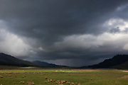 Heavy clouds hang over a sunlit green field in the Scottish Highlands