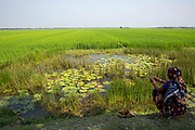 A woman sits fishing on the edge of a paddy field on the 2nd of October 2018 in Satkhira District, Bangladesh. Satkhira is a district in southwestern Bangladesh and is part of Khulna Division. It lies along the border with West Bengal, India. It is on the bank of the Arpangachhia River.