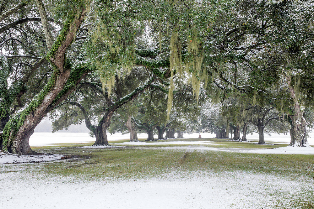 A nativity scene is set between the 100-plus year-old live  oaks of St. Joseph alley. The alley,  across River Road from the Manresa House of Retreats, is covered in snow after a rare snowstorm dropped nearly 3-inches of snow in St. James Parish Louisiana.
