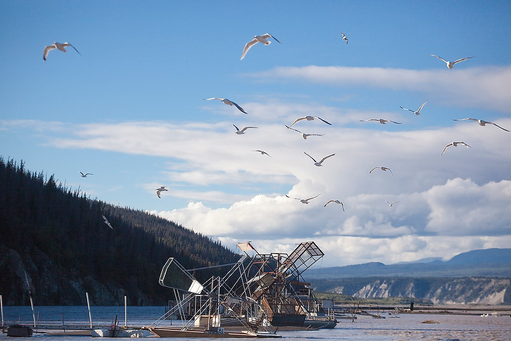 Seagulls fly over the fish wheels on the Copper River, near Chitina, Alaska.