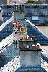Row of domestic chimney pots on houses in the UK