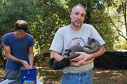 David Barron Holding Mountain Brushtail Possum