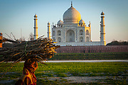 View of the Taj Mahal at sunset from across the river Yamuna with a woman carrying fire wood in the foreground.