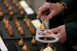 © Licensed to London News Pictures. 14/09/2018. HARROGATE, UK. Shallots are judged during the Harrogate Autumn Flower Show which runs from 14-15 September with over 5,000 blooms and an expected attendace of 60,000 visitors at the Yorkshire Showground in Harrogate..  Photo credit: Nigel Roddis/LNP