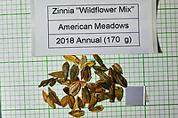 Zinnia Wildflower mix seeds from American Meadows. Image taken with a Fuji X-H1 camera and 80 mm f/2.8 macro lens + 1.4x teleconverter