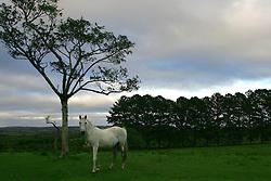 Cavalo nos campos de uma fazenda em Encruzilhada do Sul. FOTO: Jefferson Bernardes/Preview.com