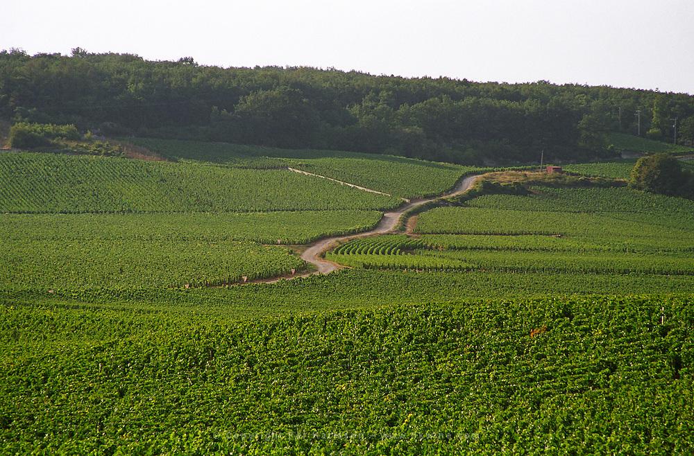The road up towards Flagey Echezeaux in Vosne-Romanee, passing through the Richebourg and Romanee Saint Vivant vineyards