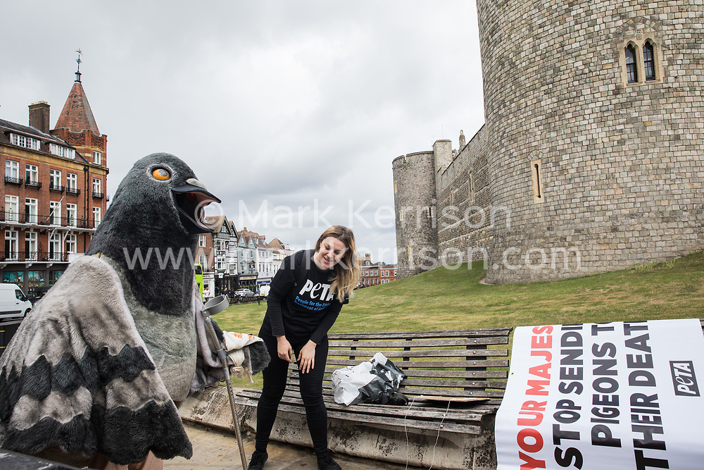 Windsor, UK. 1st July, 2020. A bandaged giant pigeon on crutches is prepared by PETA activists for a protest outside Windsor Castle. Animal rights charity PETA UK is calling on the Queen, who is currently isolating at Windsor Castle, to cut ties with pigeon racing following a PETA US investigation which revealed that all eight birds sent by the Queen to participate in the 2020 South African Million Dollar Pigeon Race (SAMDPR) died in quarantine and that fewer than a quarter of the birds entered for the race subsequently complete it.