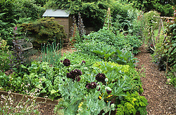 Small vegetable garden with wooden raised beds