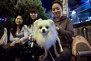 Junge Damen mit Hund im Hongdae Viertel. Dieses Gebiet vor der Hongik Universität ist vor allem für das Nachtleben bekannt. Hier befinden sich sehr viele Discotheken, Bars und Restaurants.<br /> <br /> Young ladies with dog at the Hongdae quater. Hongdae area is an entertainment area and clubbing district in northwest Seoul, South Korea - close to the Hongik University.