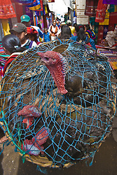 Turkey in basket at market ,Chichicastenango, Guatemala