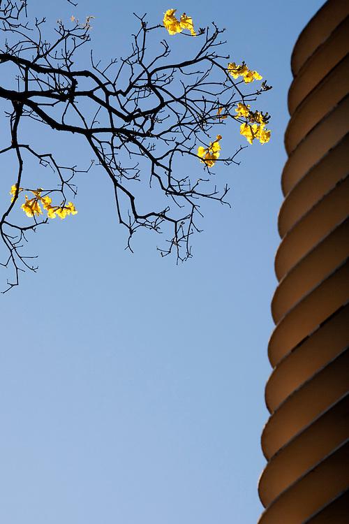 Belo Horizonte_MG, Brasil...Arvore florida proxima ao edificio Niemeyer na Praca da Liberdade...The flower tree next to the Niemeyer building in Liberdade Square...Foto: BRUNO MAGALHAES / NITRO