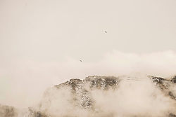 Eagles flying over snow capped mountain in misty morning, Austrian Alps, Carinthia, Austria