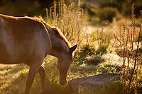 Horses graze in the morning glow of sunrise at the Estancia Los Potreros