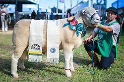 Grande campeao da raça Ile de France na 38ª Expointer, que ocorre entre 29 de agosto e 06 de setembro de 2015 no Parque de Exposições Assis Brasil, em Esteio. FOTO: Jefferson Bernardes/ Agência Preview