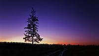Tree sunset HDR at nightfall