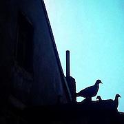 Birds on a roof getting sunburned. #Lysa #lysanalabem #birds #silhouette #roof #czechrepublic #hot #extrem #prag #praha #prague #chimney #tschechien