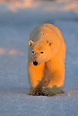 Wildlife: Birds, Mammals, Herpetofauna, Arthropods