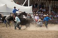 Wilsall Ranch Rodeo, Montana, Wild Cow Milking, Cleve Swandel; Cassie Woosley; Kurt Mraz; Cody Wilsey; Lazy SR Ranch Team..