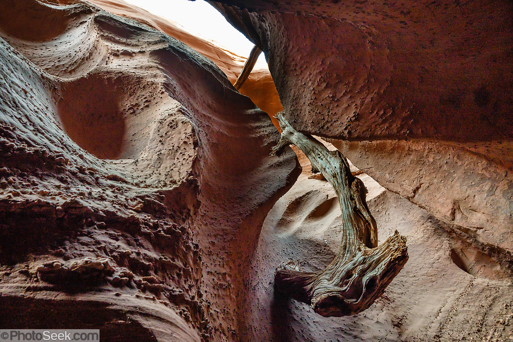 Driftwood hangs high in Spooky Gulch in Grand Staircase-Escalante National Monument, Utah, USA. We hiked from the Lower Trailhead of Dry Fork Coyote Gulch to the slot canyons of Peekaboo Gulch and Spooky Gulch, looping back via Dry Fork (5.7 miles round trip) to a bench trail. (Instead, I recommend starting at the Upper Trailhead, to cover similar mileage, to further transit the coolness of Dry Fork, and to save 10 minutes of side road driving time.)