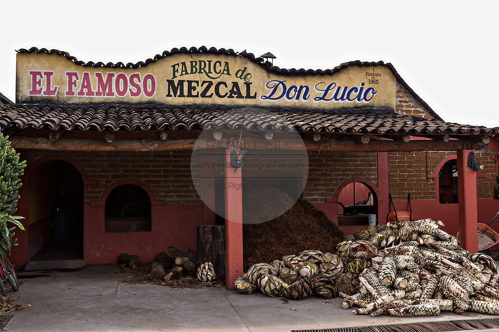 A pile of fresh blue agave hearts outside the Don Lucio artisanal Mezcal distillery November 5, 2014 in Matatlan, Mexico. Making Mezcal involves roasting the blue agave, crushing it and then fermenting the liquid.