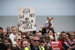 "© Licensed to London News Pictures . 07/06/2017. Colwyn Bay, UK. Placards reading "" Say no to Creuella de Ville "" in reference to Theresa May and "" Foxes for Corbyn "" are held up . Labour Party leader Jeremy Corbyn holds a campaign rally at Colwyn Bay on the final day of the General Election campaign ahead of polls opening tomorrow (8th July 2017) . Photo credit: Joel Goodman/LNP"