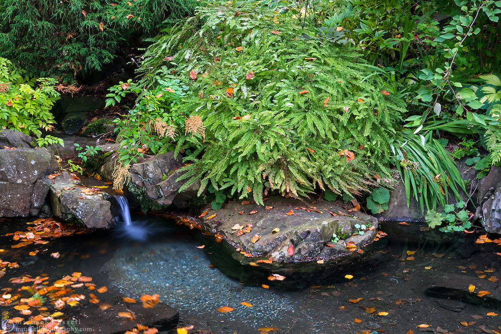 A small waterfall moves the fallen leaves in a pond at the Air Force Garden of Remembrance - Stanley Park in Vancouver, British Columbia, Canada