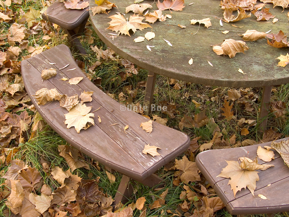 close up of a round table with benches in autumn setting