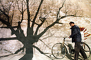 A Chinese sweets vendor pushes his bike past the shadow of a tree falling on the main wall of Beijing's Forbidden City. The Forbidden City was once the main residence of the Qing Emperors, but today is one of China's most famous tourist attractions.