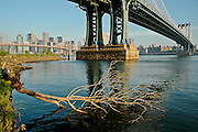 A tree has fallen into the East River next to the Manhattan bridge in DUMBO, Brooklyn, New york, 2008.