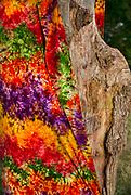 Glastonbury Festival, 2015.<br /> Tie-dyed cloth on oak tree near stone circle