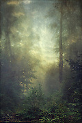 Forest in fog - texturized photograph<br /> Prints & more<.<br /> http://www.redbubble.com/people/dyrkwyst/works/17184475-secret-domain?ref=recent-owner