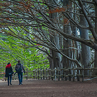 A couple walks along a trail beneath Cypress trees in Fitzgerald Marine Reserve in Moss Beach, California.