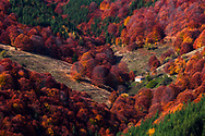 Small house among a forest of red color