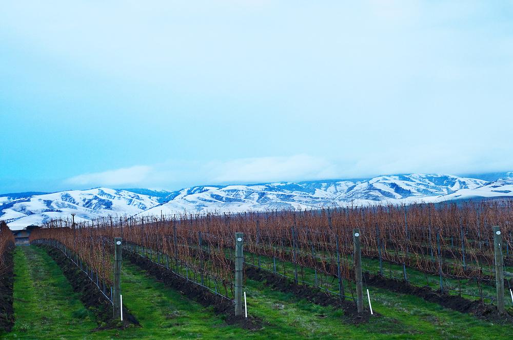 Winter Walla Walla Vineyard with Blue mountains