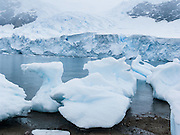 A tidewater glacier on the continent of Antarctica calves icebergs into Neko Harbor (an inlet of the Southern Ocean), causing ice chunks to collect on a beach of Graham Land, the north portion of the Antarctic Peninsula.